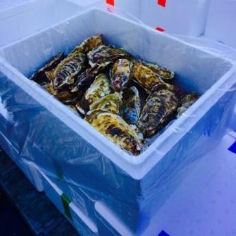 殻付きカキ 殻付牡蠣 カキ 生鮮 加熱用 宮城県産 三陸産 1K入り