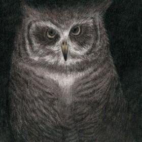【中古】【CD】 フクロウの声が聞こえる 小沢健二とSEKAI NO OWARI TYCT-39063
