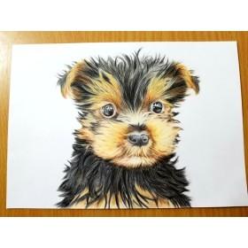 ヨークシャーテリア ワンコ 犬 色鉛筆画