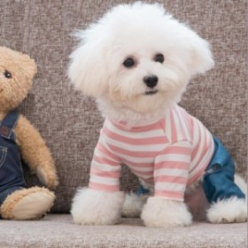 ドッグウエア犬の服ツナギカバーオールボーダークマデニムフード付き風犬用品ペットグッズペット用品犬服かわいいカジ セットアップ