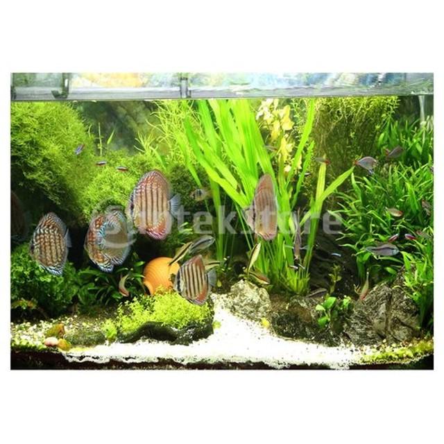 実用的な水族館3D HDの水槽の背景ポスター魚の背景