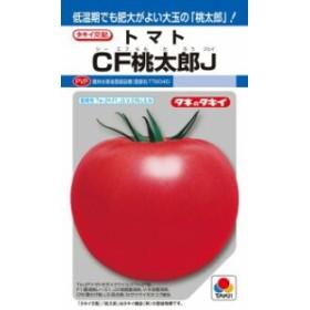 タキイ種苗 トマト CF桃太郎J 1000粒