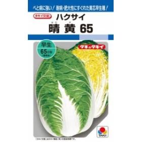 タキイ種苗 ハクサイ 白菜 晴黄65 DF