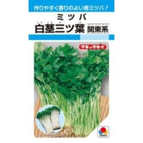 タキイ種苗 葉菜 白茎三ツ葉(関東系)MF