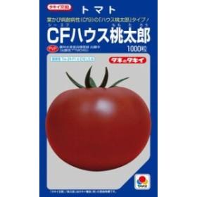 タキイ種苗 トマト CFハウス桃太郎 1000粒