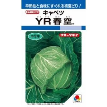 タキイ種苗 キャベツ YR春空 ペレット 小袋 150粒