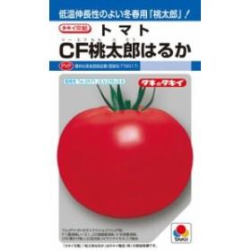 タキイ種苗 トマト CF桃太郎はるか 1000粒