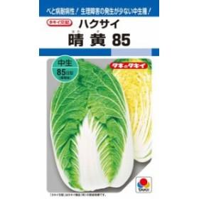 タキイ種苗 ハクサイ 白菜 晴黄85 ペレット 小袋 100粒