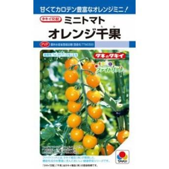 タキイ種苗 トマト オレンジ千果 DF