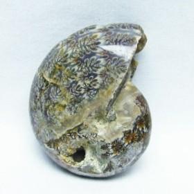 アンモナイト 化石 原石 171-1279