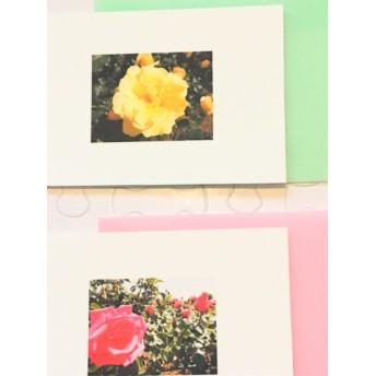 フラワーメッセージカード〜「The Secret Garden No.2/ゴールド・バニー&コンパッション/カード&封筒 各2枚入り」