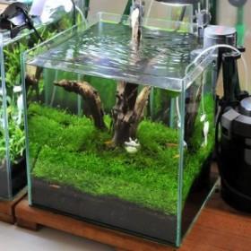 (水草)初めての流木レイアウトセット 30cmキューブ水槽用(水草・流木のみ) 熱帯魚 本州四国限定 北海道航空便要保温