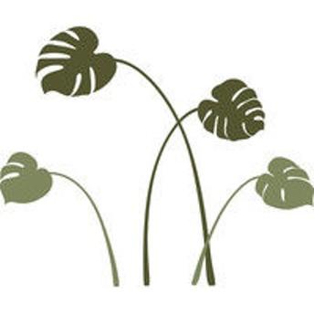マッチングジャパン 大判フチなし転写・ウォールステッカー 植物 人気「モンステラ/G」 CO-8030-AS(直送品)