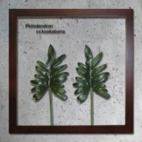 インテリアグリーンアート ForestDeco Philodendron cv kookaburra ブラウン FD-1008 kar-3060948s1  北欧/インテリア/セール/モダン/送