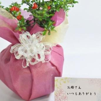 【お祝い 花盆栽 ぼんさい 和風 プレゼント 開店 お祝い 退職 ラッピング】[母の日 HB]長寿梅中 白掛鉢[白掛受皿付き]