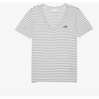 『WEB限定』 ピンボーダーVネックTシャツ