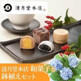 【父の日フラワーギフト】 鉢植えセット「東京銀座 清月堂本店 人気商品詰め合わせ」