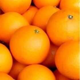 清見オレンジ[約4.5kg]湯浅町田村産(果実サイズおまかせ)春みかん/紀伊国屋文左衛門本舗