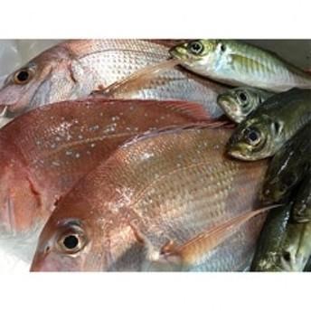 竹中水産の当地自慢の鮮魚2種「真鯵と天鯛」!約1キロセット!(宇和海産)