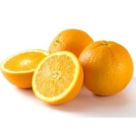 和歌山県有田産 ネーブルオレンジ 約7kg 20~30玉