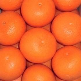 和歌山県有田産 清見オレンジ(きよみおれんじ) 約5kg 20~30玉