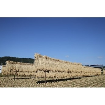 【2019年産新米】限定栽培『はさがけ』北海道産ゆめぴりか5kg3ヶ月連続お届け!