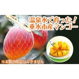 天然温泉水【財宝】で栽培!超旨!完熟マンゴー