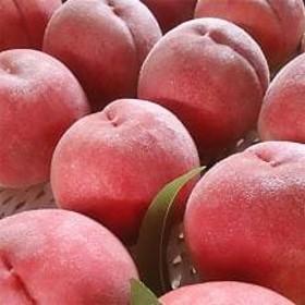 日本一の桃の産地 山梨より直送!「完熟特選もも約2kg」