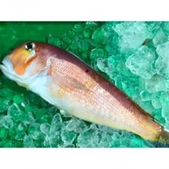 竹中水産の「甘鯛」(赤又は白)約1キロ