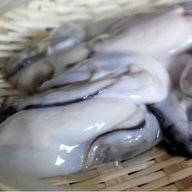 魚市場厳選 冷凍むき身牡蠣(加熱調理用)1kg