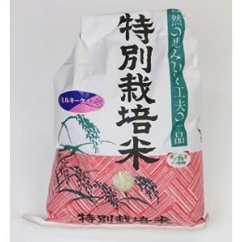 特別栽培米の新米ミルキークイーン10㎏