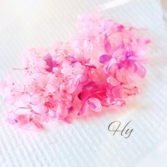 アジサイ◇ふんわり桃色グラデーション◇紫陽花手のひらパック