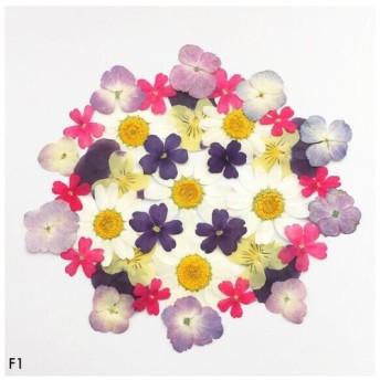 【F1】押し花アソートパックセット flower mix