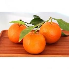 主井農園の橙 9Kg
