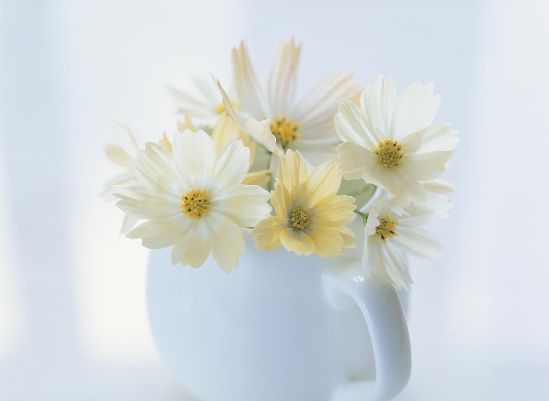 ペールイエローの花