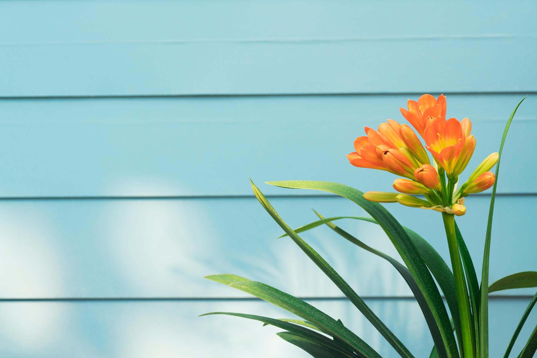 アクアブルーに塗られた壁面と花