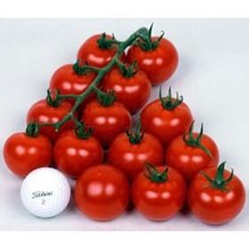 丸種 トマト ワンダーボール50 小袋