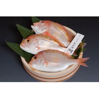 A004:天然釣りレンコ鯛(下処理済)