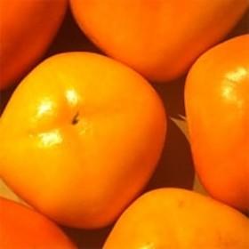【秋の味覚】和歌山の人気 種なし柿 たっぷり約7.5Kg 紀ノ川グルメ市場