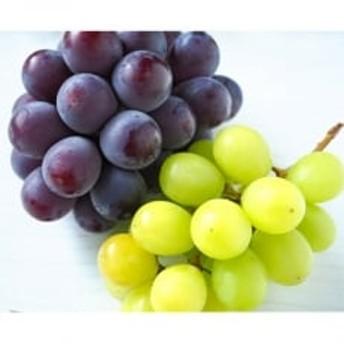 美作産の葡萄詰め合わせ2kg(シャインマスカット1房、ピオーネ2房)