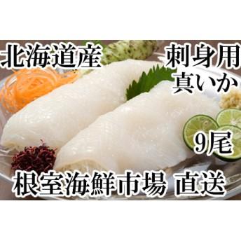 お刺身用真いか9尾 根室海鮮市場[直送]