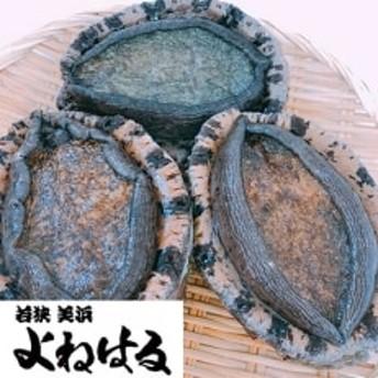 若狭湾の天然活黒アワビ 1.5kg以上【特大サイズ】
