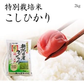 特別栽培米新潟産コシヒカリ2kg / 平成30年産米 送料無料 (一部地域のぞく) お米 新潟 こしひかり