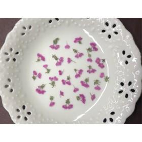 エリカシャミソニス(押し花)