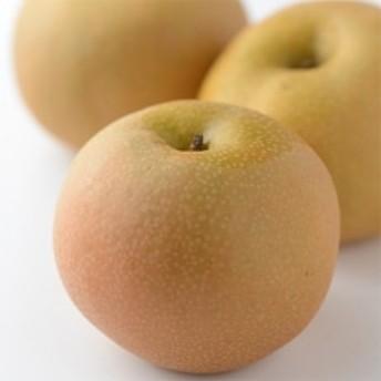 【信州須坂の梨】 旬の梨 約5kg(L~4L) 信州グルメ市場