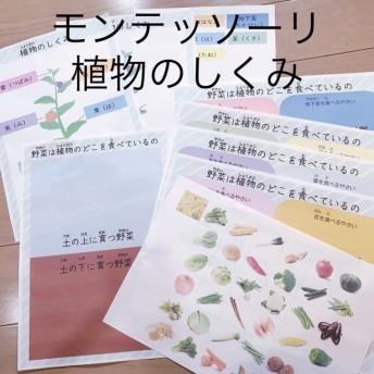 ☆モンテッソーリ 植物のしくみ☆