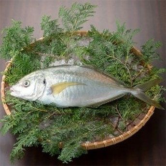 シマアジ 1匹 約1.0~1.3kg