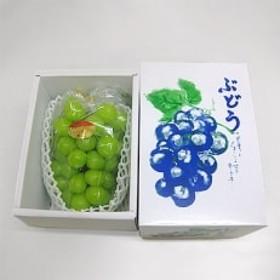 【特選】大房シャインマスカット1房(800g以上)