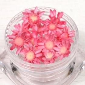 【ドライフラワー】プチサイズ15輪 単色 スターフラワー 《キャンディーピンク》 [小花,プリザーブドフラワー,花材,flower,桃,ピンク