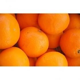 和歌山産清見オレンジ約5kg(S~3Lサイズ混合)